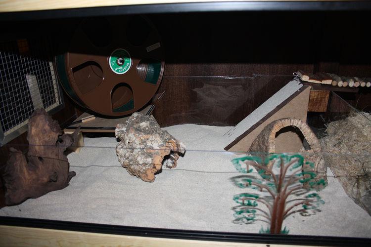 1a: Sandbecken, 27cm Laufrad, 3-5cm Bimsi Badesand (der hässliche Baum verdeckt nur eine hässliche Klebestelle...