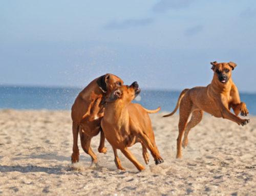 Hunde hetzen Rehe in den Tod