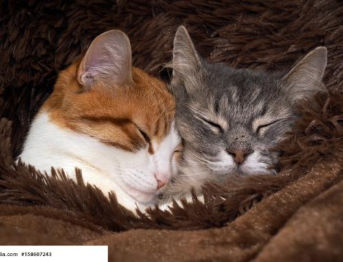 FDP Vorsitzender fordert Katzensteuer