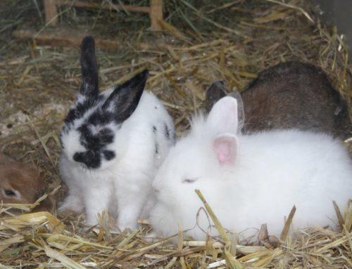 Das Kaninchen-Wesen