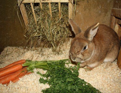 Grundlagen zur Fütterung von Kaninchen