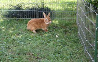 Kaninchenstall, der Auslauf