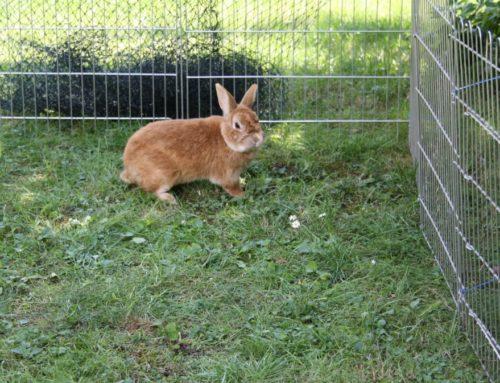 Anforderungen an den Kaninchenstall